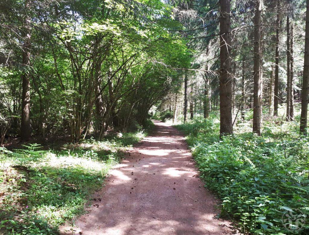 Traversée des bois jusqu'à Laschamps