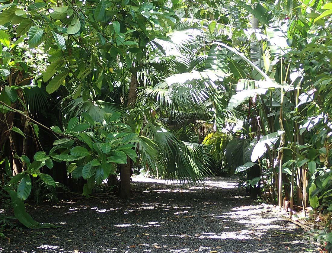 Une allée luxuriante du jardin