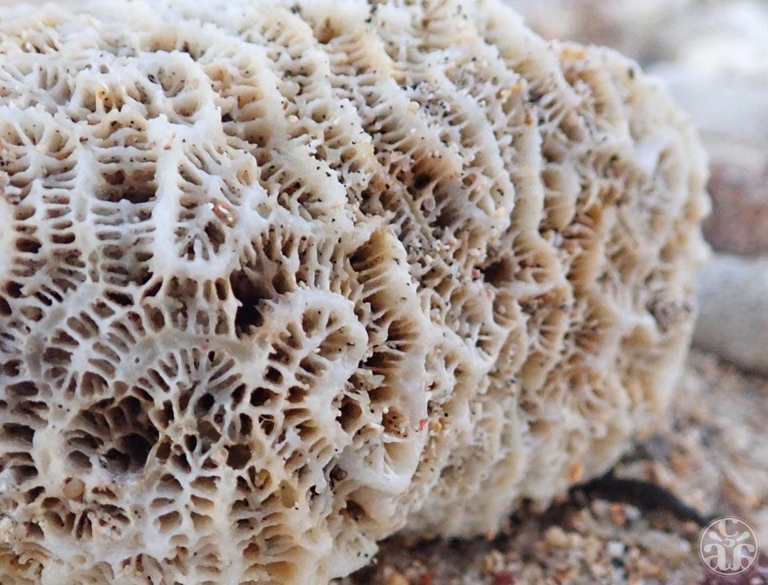 Corail sur la plage de Trou d'eau