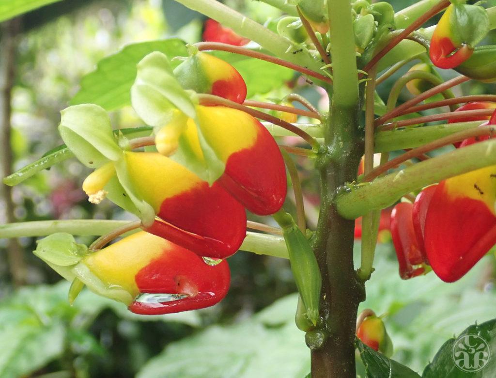 Fleurs perroquets