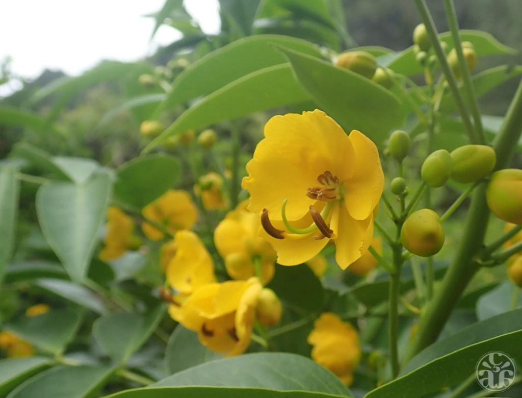 Fleur jaune, nom inconnu