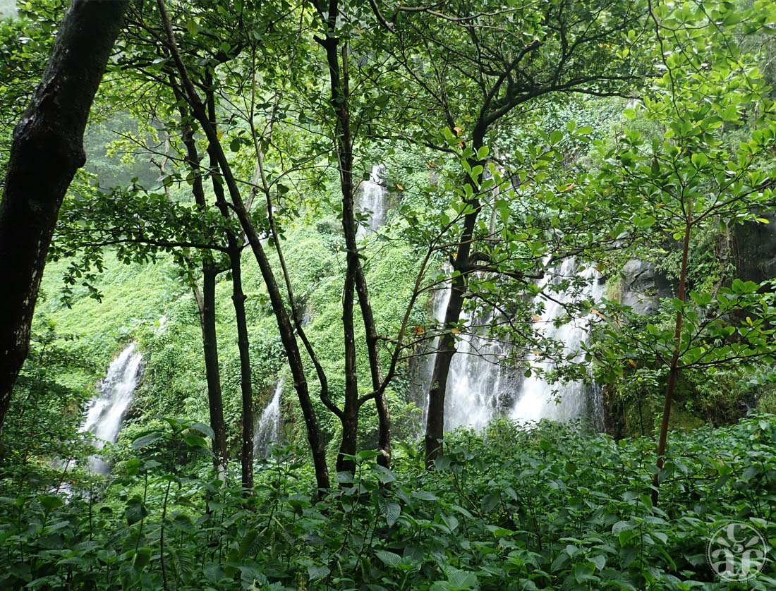 Les nombreuses cascades de la anse et sa végétation luxuriante