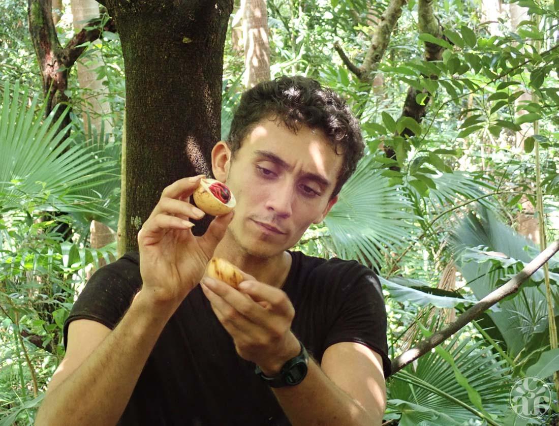 Mathieu nous présentant une noix de muscade