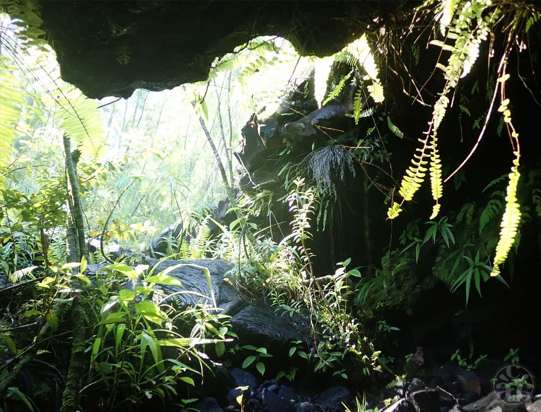 Vue depuis l'intérieur de la grotte