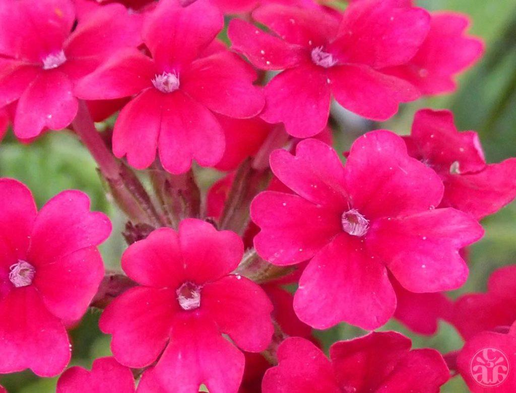 Fleurs inconnues