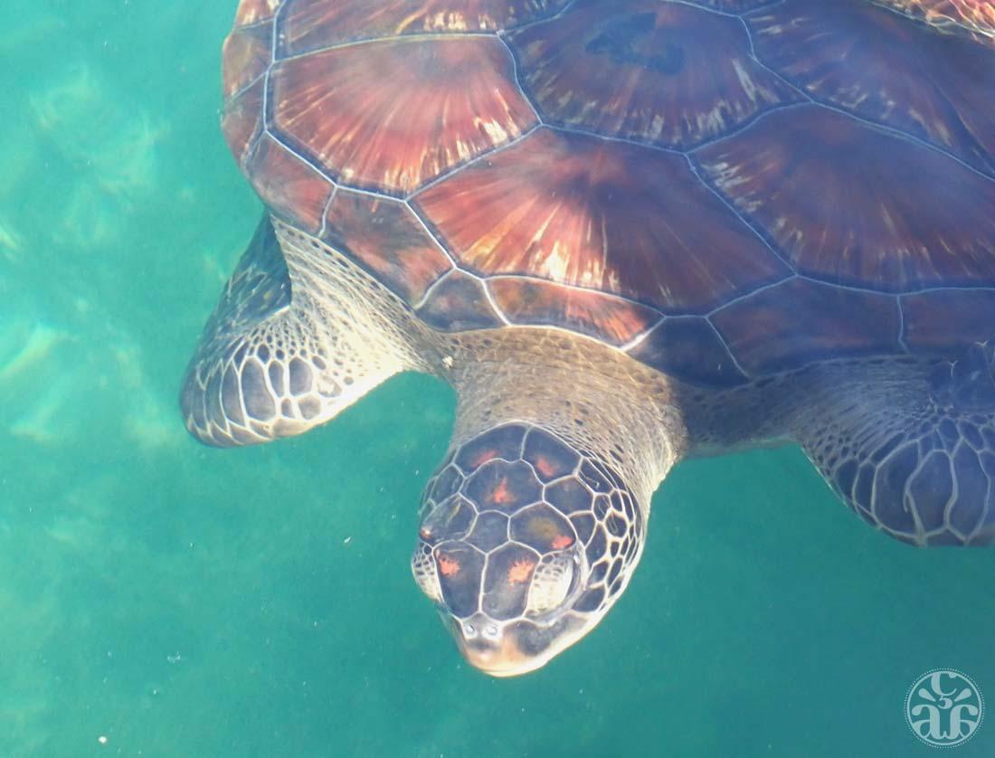 Des tortues en veux-tu, en voilà !