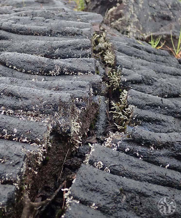 Fissure au milieu d'une lave cordée
